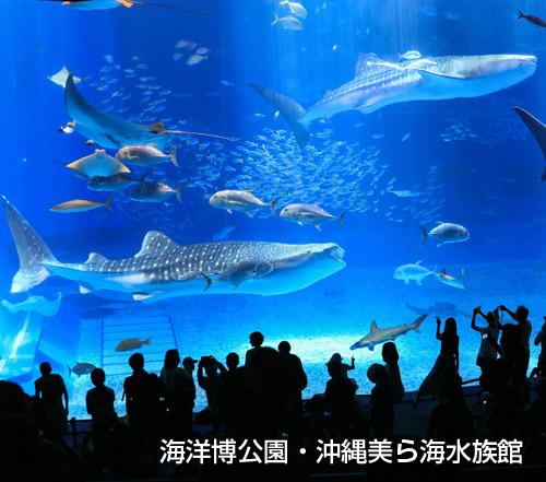 美ら海水族館チケット付