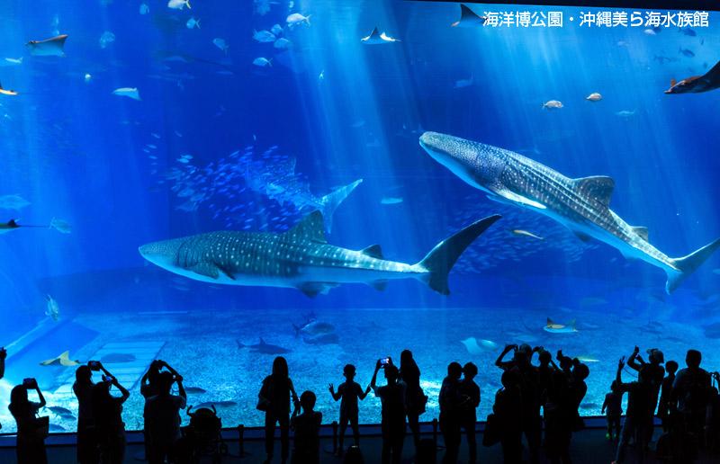 沖縄美ら海水族館入館チケットで2倍楽しめます!
